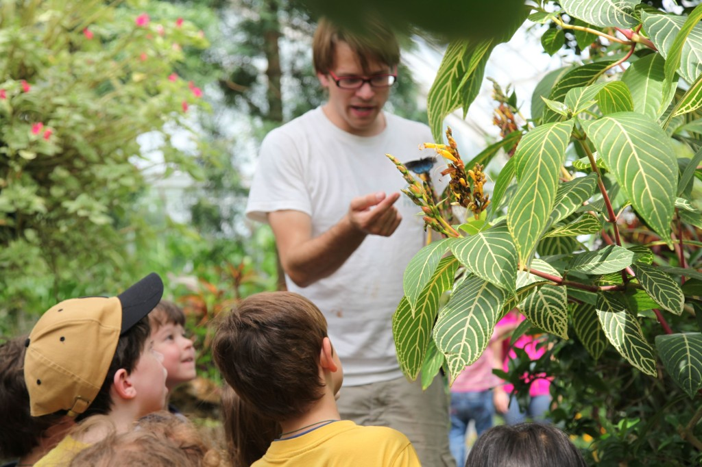 The Butterfly forest at Phipps.  Photo by Julia Petruska.