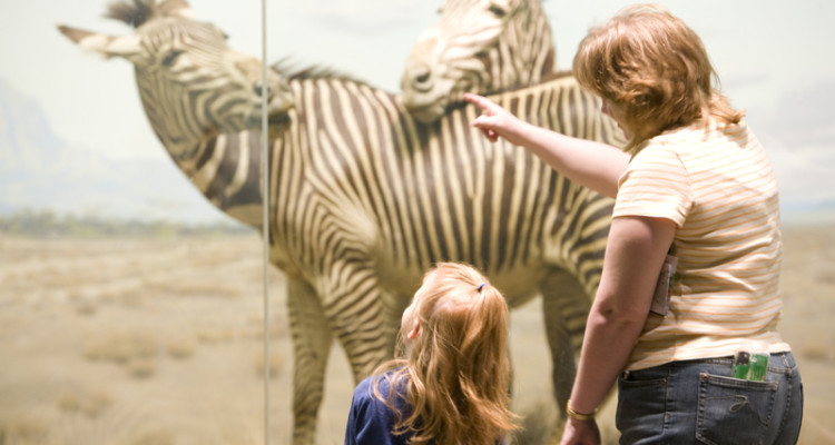 Carnegie Museum Of Natural History Free Thursday