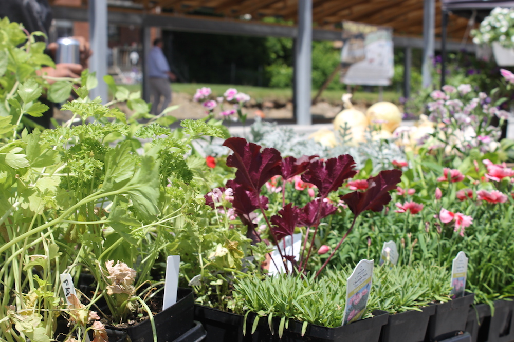 Historic Dairy District Marketplace pavilion vegetables. Courtesy Economic Development South.