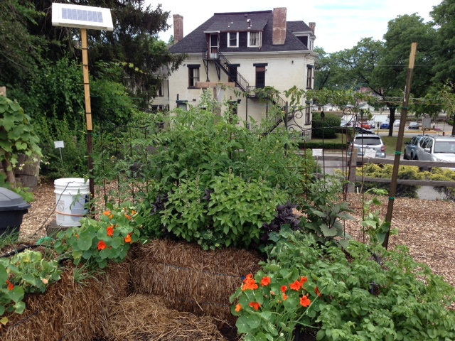 Straw bale garden at the Edible Teaching Garden in Point Breeze.