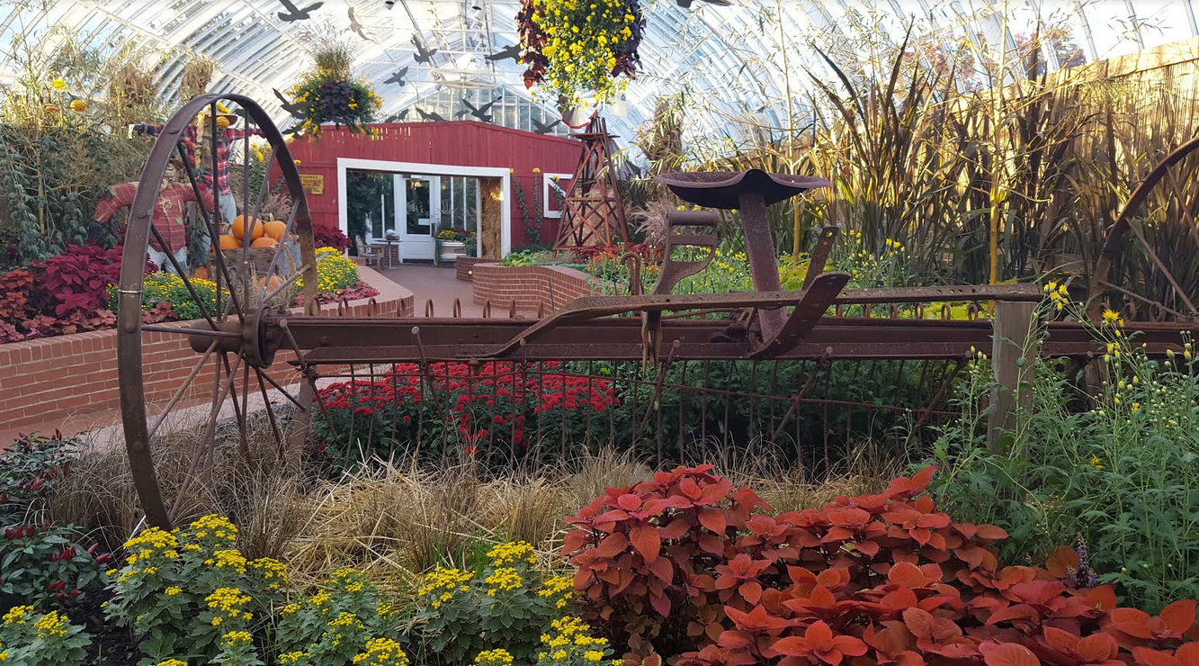 Bask In Natures Bounty At Phipps Fall Flower Show