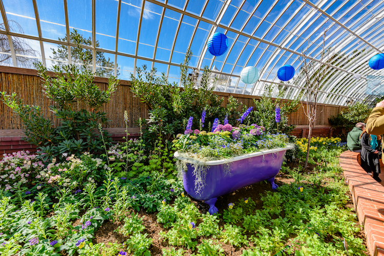 Spring Flower Show Blooms At Phipps