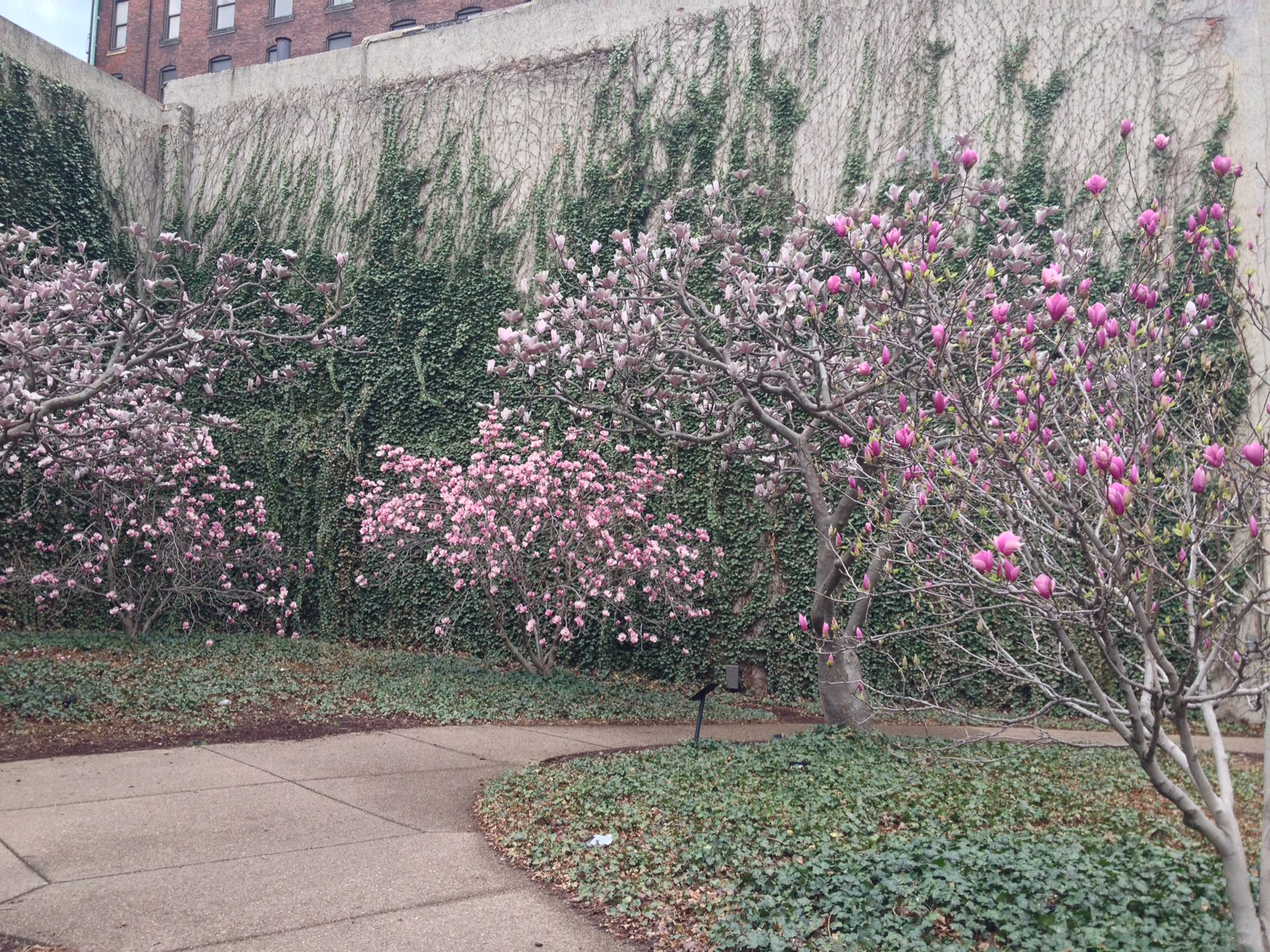 Public art in the Cultural Trust District--real blooms against the year-round blooms/ photo by Tracy Certo