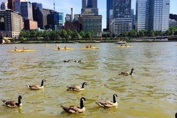Kayaking on the Allegheny River. Geese optional. Photo by Tracy Certo