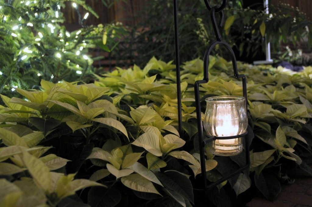 Candlelight Evenings at Phipps. Photo by Paul G. Wiegman