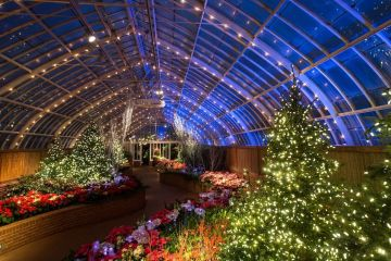 Phipps Winter Flower Show, Photo by Annie O'Neill