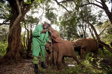 As showcased in the IMAX¨ film Born To Be Wild 3D, elephants and their keepers form strong bonds that can last long after the elephants have returned to the wild.