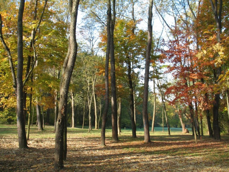 One of the burial areas. Courtesy Penn Forest Natural Burial Park.