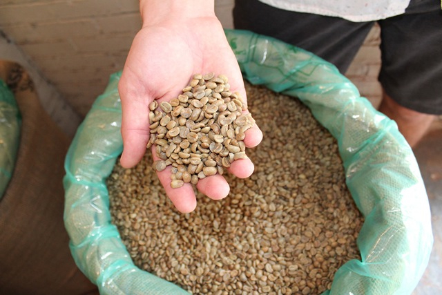 KLVN Coffee Lab's coffee beans sourced from Finca Jazmin farm in Honduras.