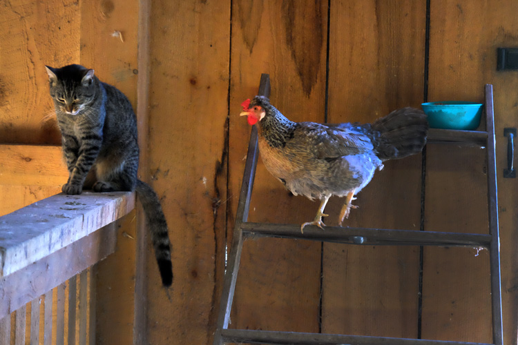 Animals live together on Hope Haven Farm. Photo by Brian Cohen.