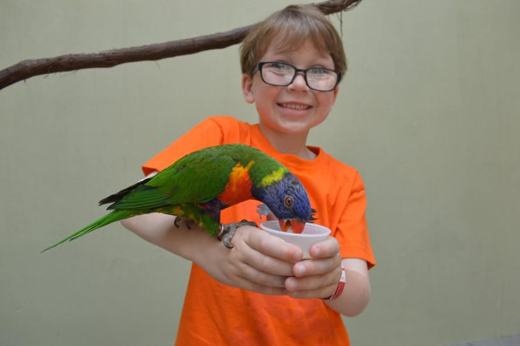 Feeding the Rainbow Lorikeets. Photo: National Aviary.