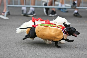 Running of the Wieners. Photo by Katelyn Rose Photography.