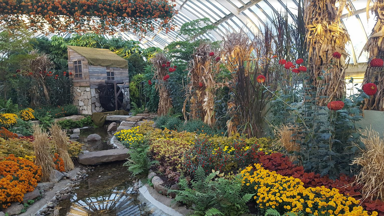 Bask in natures bounty at phipps fall flower show continuing a popular annual tradition at the oakland designation phipps latest fall flower show has filled the entire conservatory with 13 classifications dhlflorist Choice Image