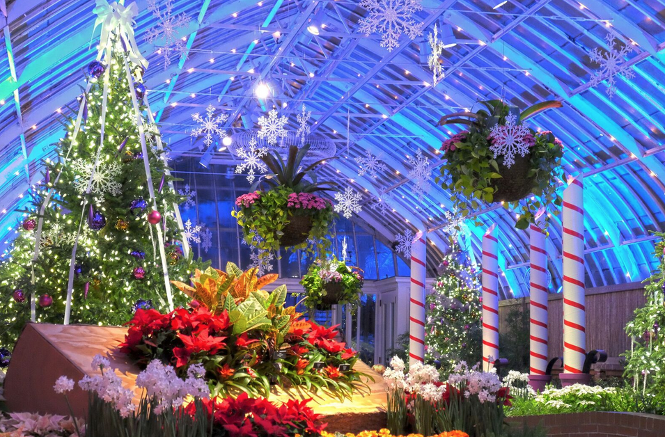 Phipps 39 Winter Flower Show And Light Garden Is Bigger Than Ever