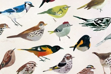 The birds of Dawn Chorus. Image courtesy of The Studio.