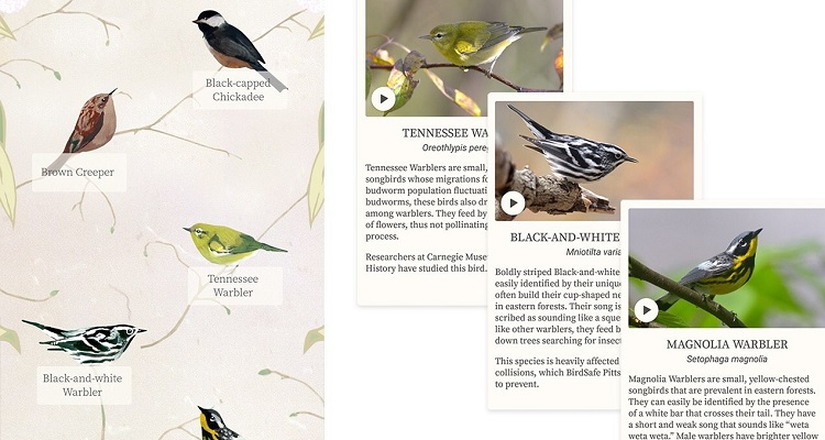 Dawn Chorus bird facts. Image courtesy of The Studio.