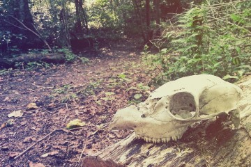 An animal skull marks a trail in Dead Man's Hollow. Image courtesy of Allegheny Land Trust.